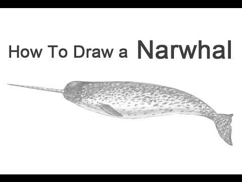 how to draw a narwal narwhal cartoon drawing at getdrawings free download a draw narwal to how