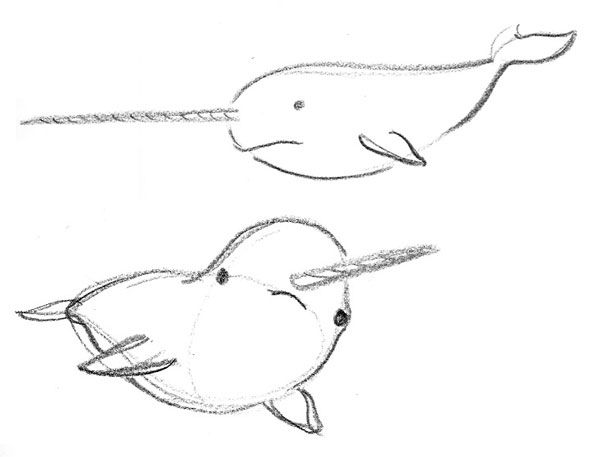 how to draw a narwal narwhal vector images over 450 to a how narwal draw