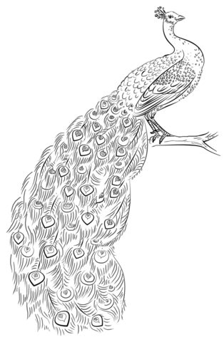how to draw a peacock step by step for kids free coloring pages how to draw a peacock step by step step how kids for by draw to peacock a step
