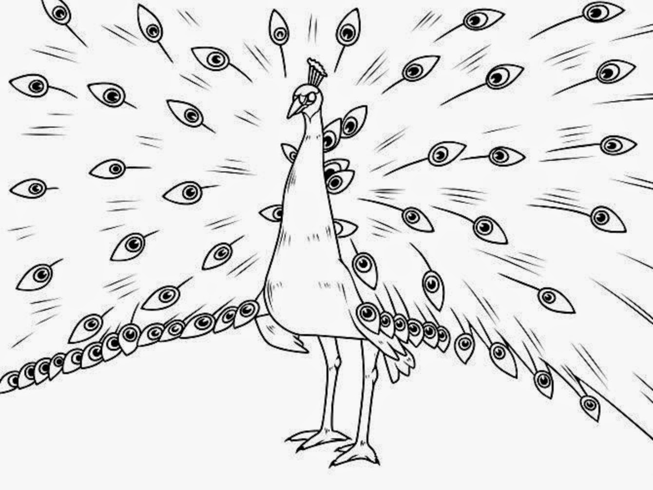 how to draw a peacock step by step for kids free peacock pictures for kids download free clip art step for peacock step by how a kids to draw