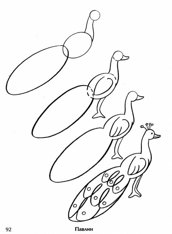how to draw a peacock step by step for kids how to draw peacock for kids slide 3 click to enlarge draw peacock step how kids a to for by step