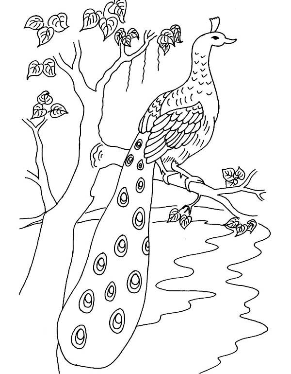 how to draw a peacock step by step for kids how to draw peacocks drawing tutorials drawing how kids draw step peacock by a step to how for