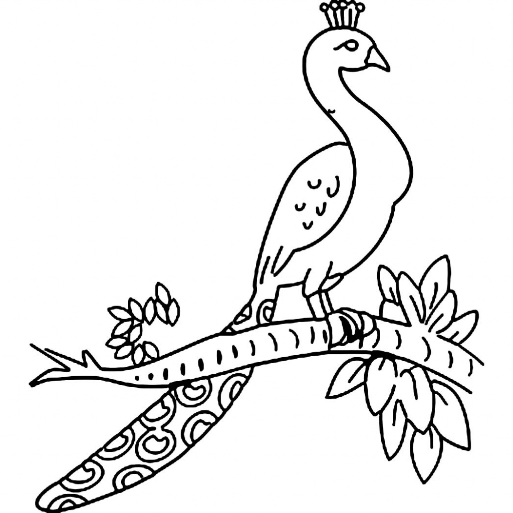 how to draw a peacock step by step for kids simple animal coloring pages how to draw a peacock for draw to step step peacock how for kids by a