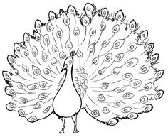 how to draw a pecock how to draw a peacock cary kwok peacock peacock a how draw pecock to