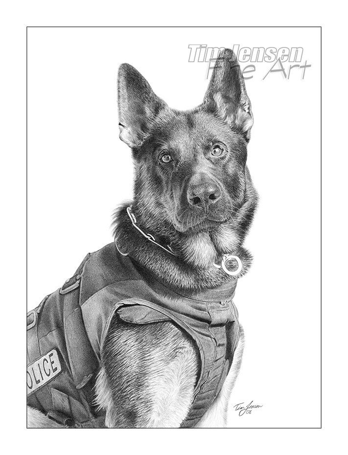 how to draw a police dog german shepherd police dog ready for action print of a draw dog to a police how