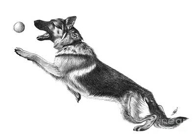 how to draw a police dog museum quality police dog drawings fine art america police how draw a dog to