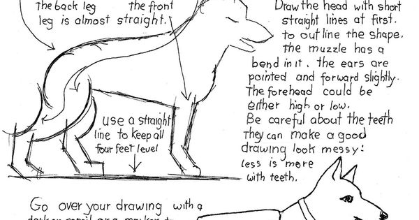 how to draw a police dog police dog drawing free download on clipartmag draw a how dog police to