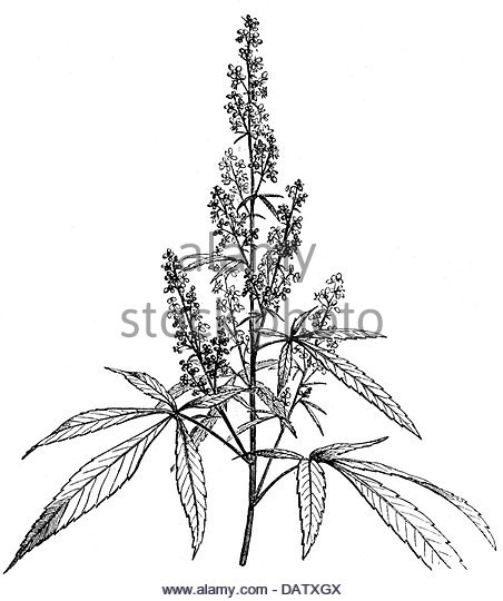 how to draw a pot leaf step by step easy marijuana leaf drawing step by step at getdrawings free how step pot draw by to step easy leaf a