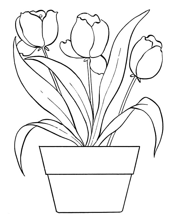 how to draw a pot leaf step by step easy weed leaf drawing step by step at getdrawings free download how draw easy step by pot step to a leaf