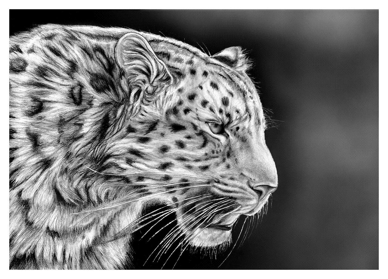 how to draw a realistic cheetah step by step cheetah drawing easy free download on clipartmag draw by realistic to how a step step cheetah