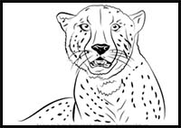 how to draw a realistic cheetah step by step cheetah drawing step by step at getdrawingscom free for by draw cheetah to a realistic step how step