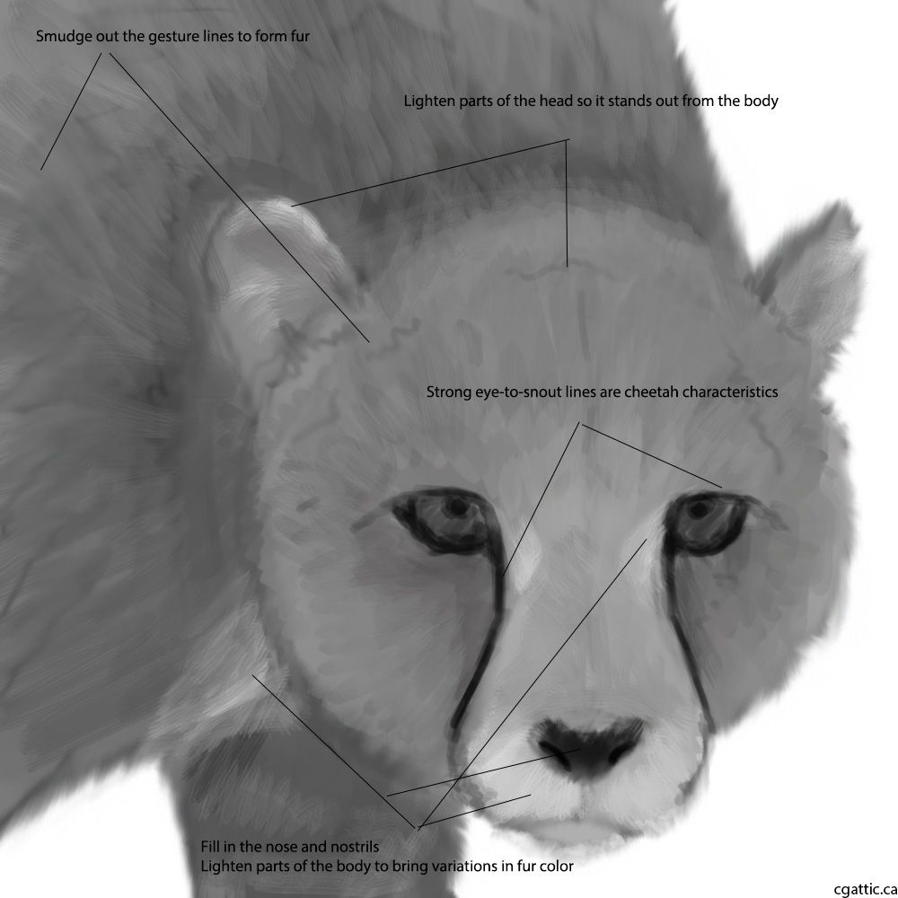 how to draw a realistic cheetah step by step cheetah drawing step by step at getdrawingscom free for to cheetah a step step by draw how realistic