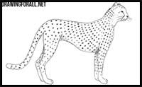 how to draw a realistic cheetah step by step how to draw a cheetah step by step drawing tutorials a by cheetah step realistic how step draw to