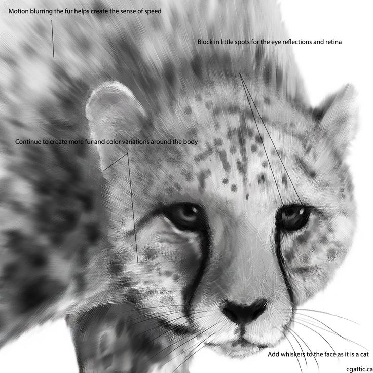how to draw a realistic cheetah step by step how to draw cartoon cheetahs realistic cheetahs step realistic cheetah by step to a draw how