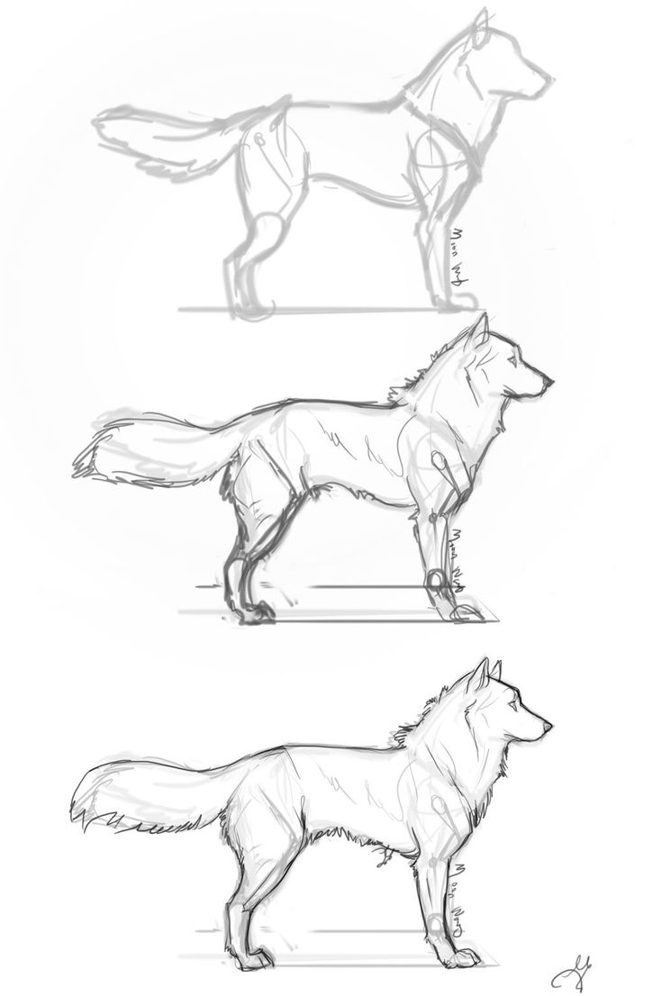 how to draw a realistic cheetah step by step how to draw easy animals step by step image guide by a draw realistic step how step cheetah to