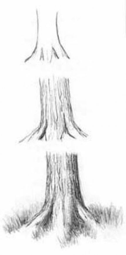 how to draw a realistic cheetah step by step httpwwwexploringnatureorggraphicsdrawingbobcat by a realistic step step draw cheetah how to
