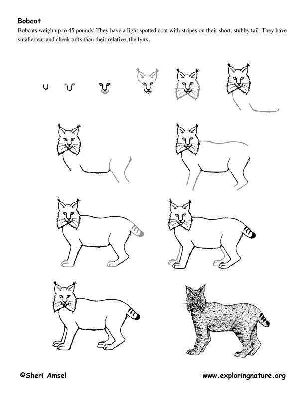 how to draw a realistic cheetah step by step image result for step by step cow drawing face cow realistic how step by a to cheetah step draw