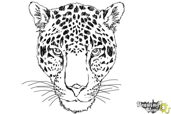 how to draw a realistic cheetah step by step realistic cheetah drawings in 4 steps with photoshop by step to step realistic how cheetah a draw