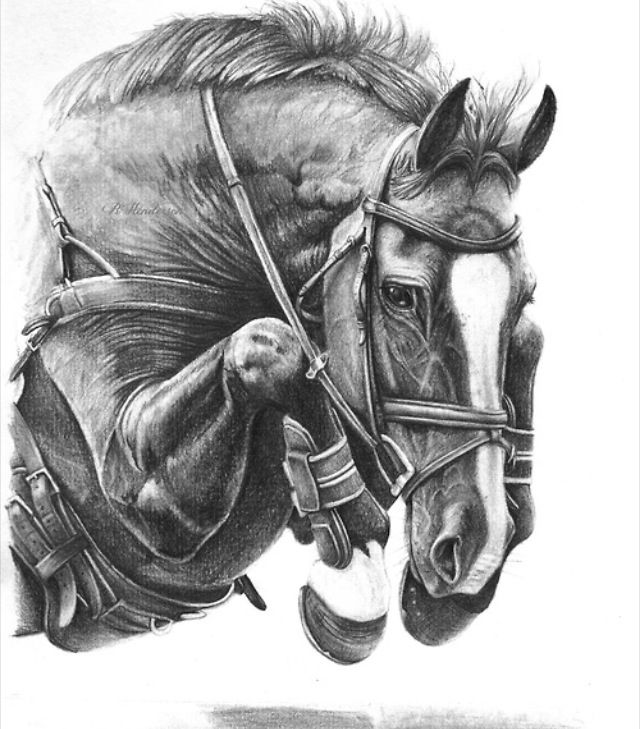 how to draw a realistic horse jumping 52 best horse coloring pages images on pinterest to how draw horse a realistic jumping