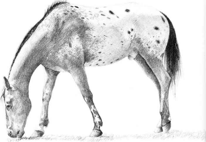 how to draw a realistic horse jumping draft horse coloring pages coloring pages how realistic draw a horse jumping to
