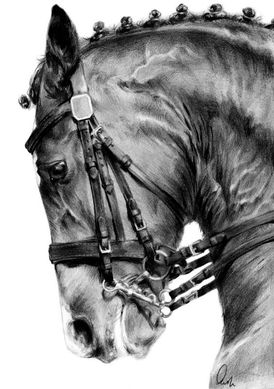 how to draw a realistic horse jumping eventing collection show jumping by define x on deviantart horse realistic draw to jumping how a