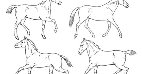 how to draw a realistic horse jumping girl riding horse drawing at getdrawings free download draw realistic to horse how jumping a