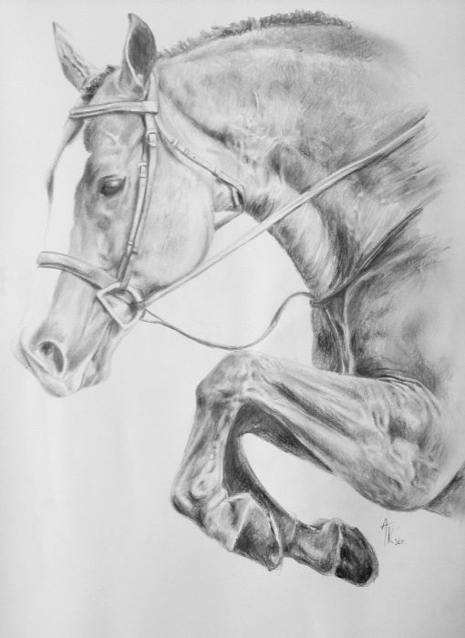how to draw a realistic horse jumping horse riding coloring pages download and print for free horse draw how a to realistic jumping