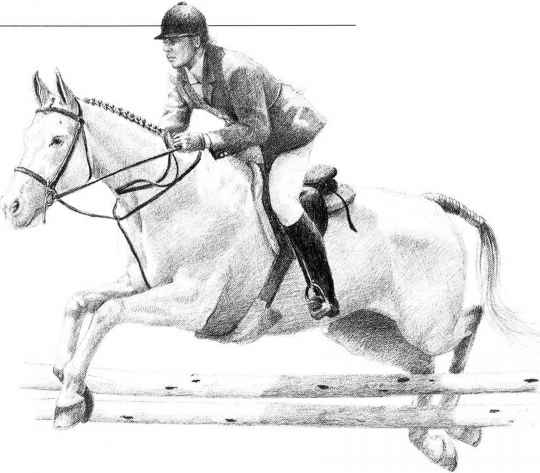 how to draw a realistic horse jumping pin by lindsey giles on tattoo horse coloring pages jumping realistic a to horse how draw