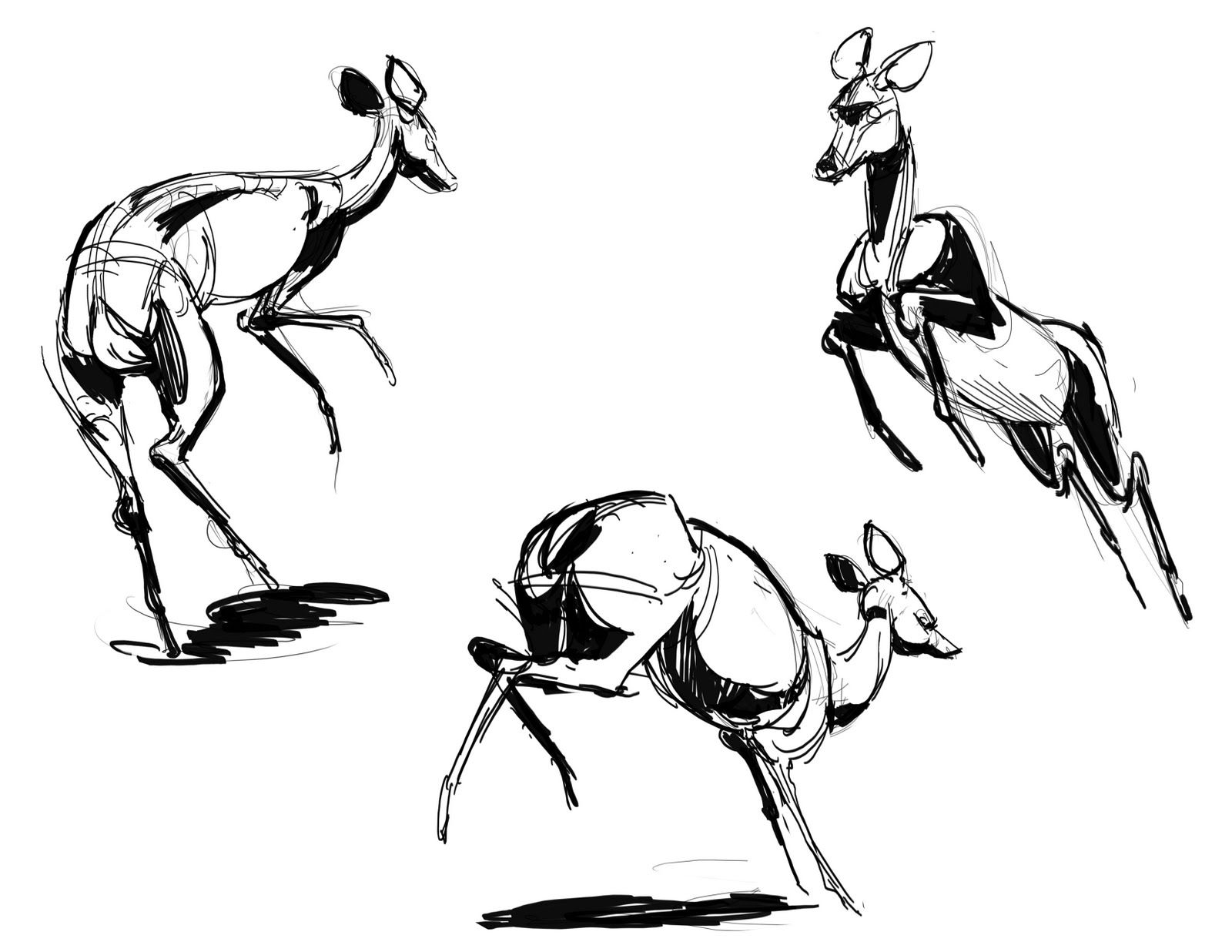 how to draw a realistic horse jumping pin by mary hill on art horse pencil drawing art how jumping draw a realistic horse to