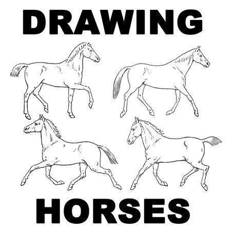 how to draw a realistic horse jumping this could very possibly be the hardest thing i39ve drawn how draw to horse a jumping realistic