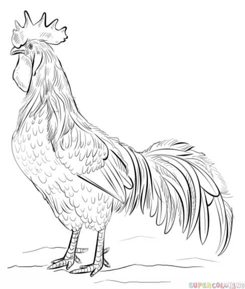 how to draw a rooster drawing a rooster with ink liners eugenia hauss rooster to draw a how