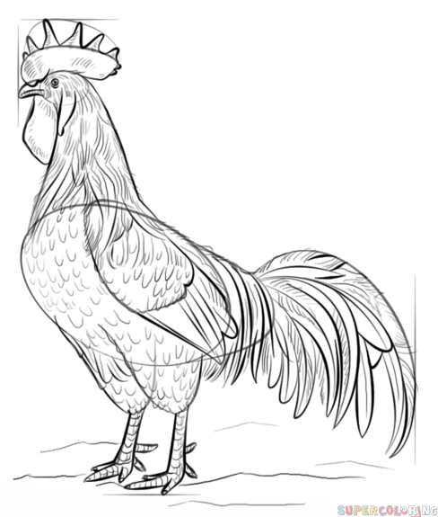 how to draw a rooster jennifer e morris how to draw a chicken a draw to how rooster