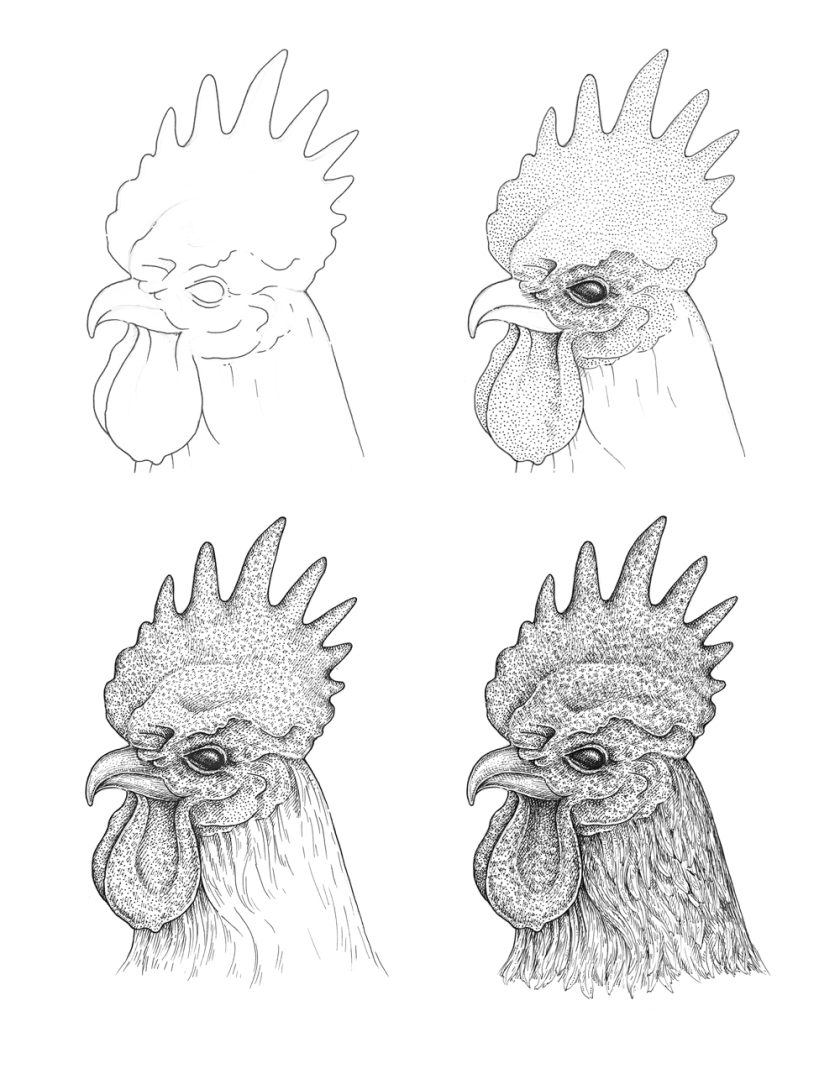 how to draw a rooster simple rooster drawing at paintingvalleycom explore how rooster to draw a