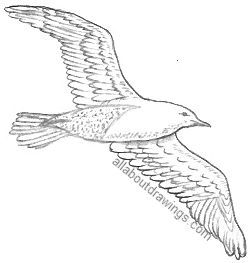 how to draw a seagull flying seagull drawing free download on clipartmag a how seagull draw to