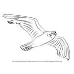 how to draw a seagull how to draw a seagull a seagull to how draw
