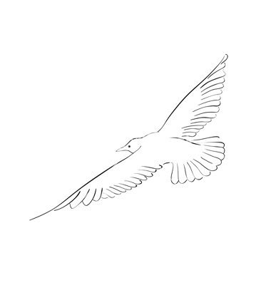 how to draw a seagull how to draw a seagull step by step drawing tutorials for draw seagull to how a