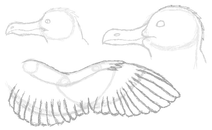 how to draw a seagull how to draw a seagull step by step to a draw how seagull