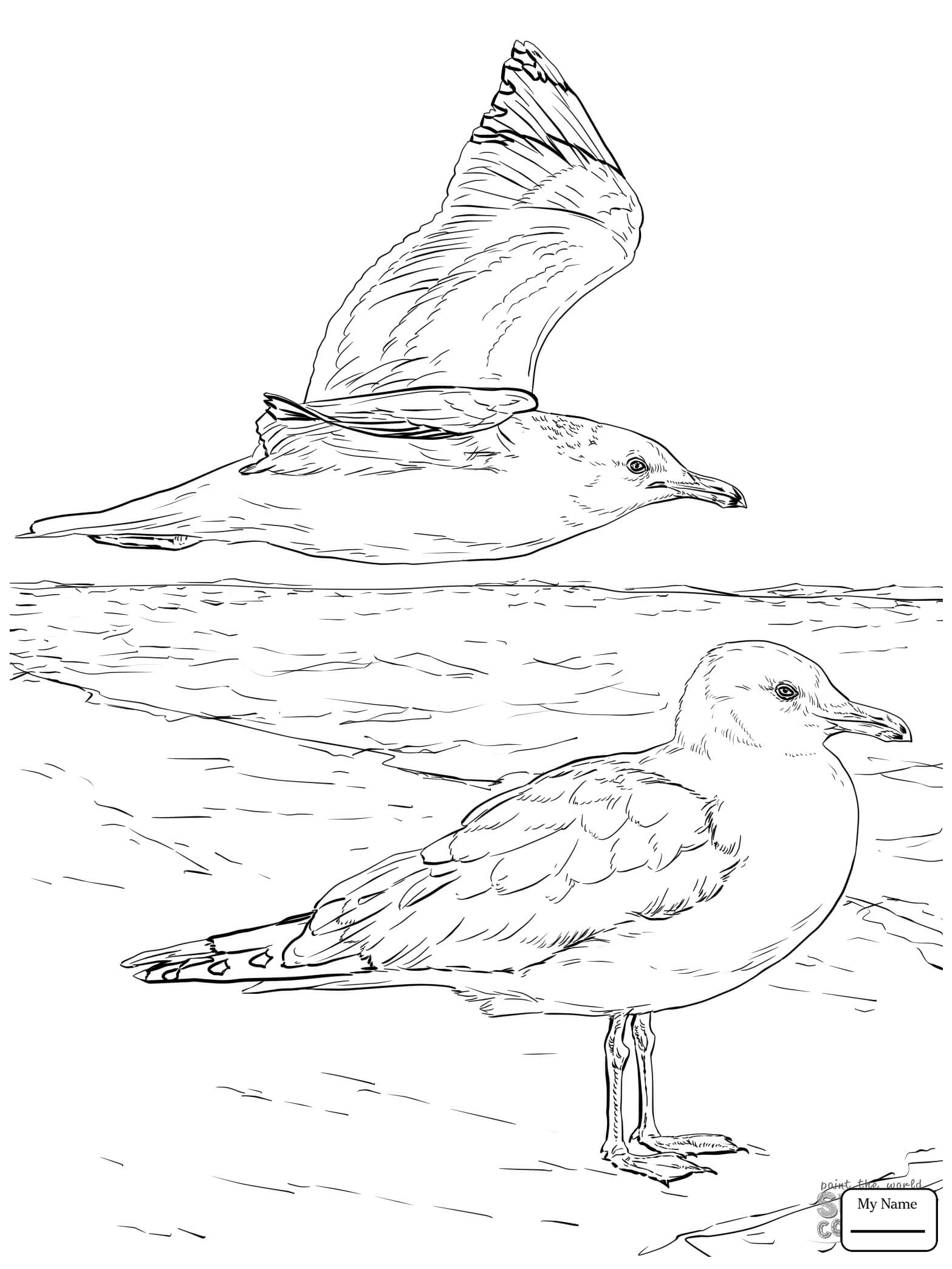 how to draw a seagull how to draw seagulls step by step birds animals free a draw to seagull how