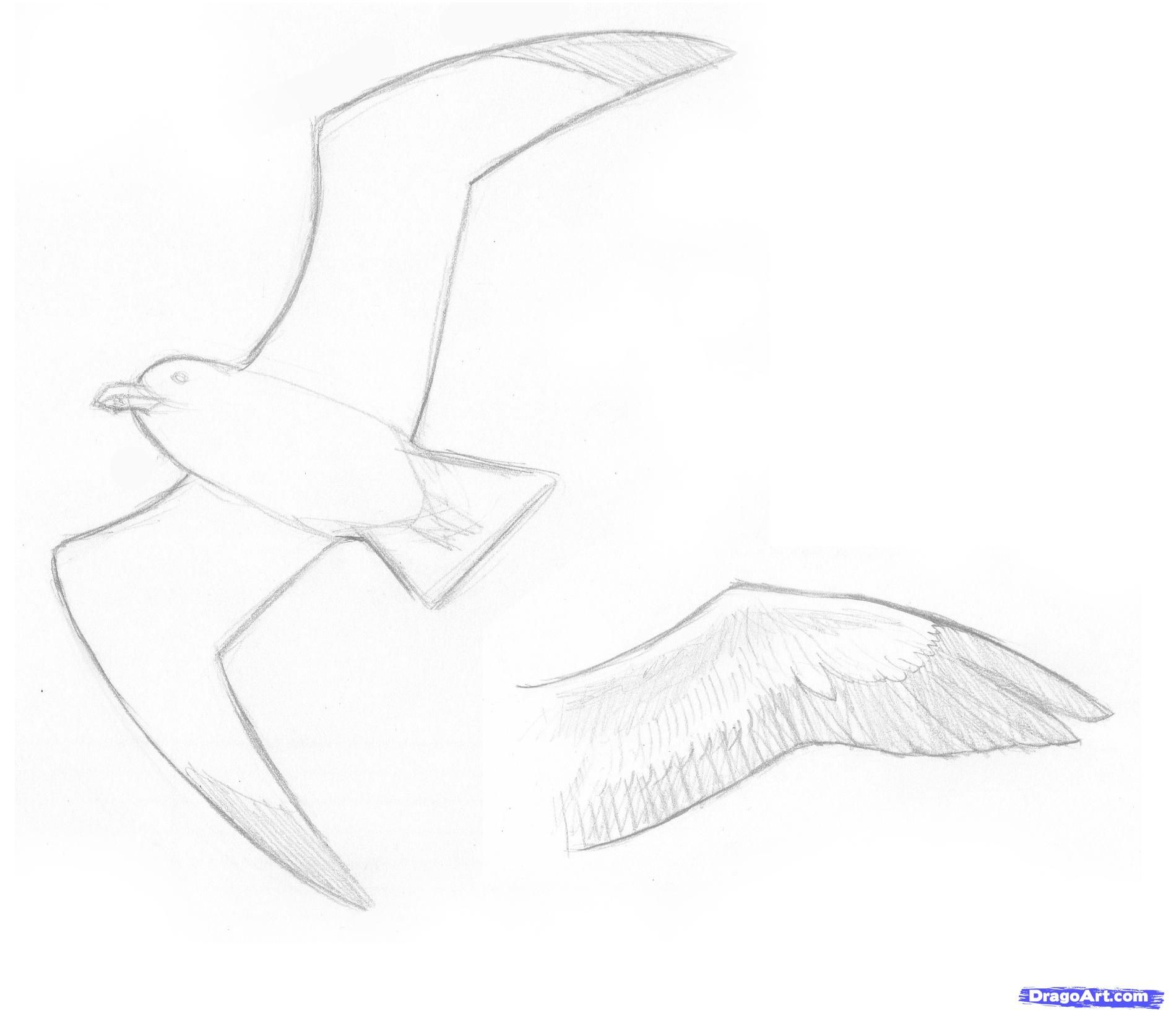 how to draw a seagull how to draw seagulls step by step birds animals free draw to seagull a how