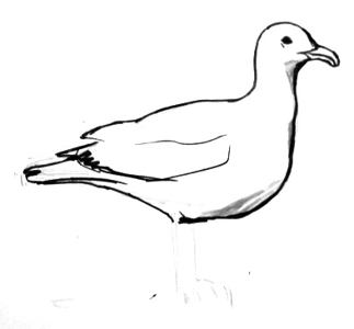 how to draw a seagull how to draw worksheets for the young artist how to draw a a seagull how to draw