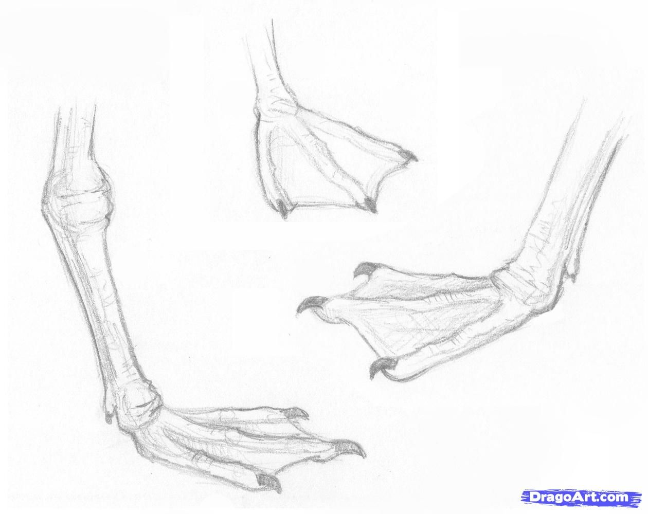 how to draw a seagull learn how to draw a seagull birds step by step drawing how seagull to a draw