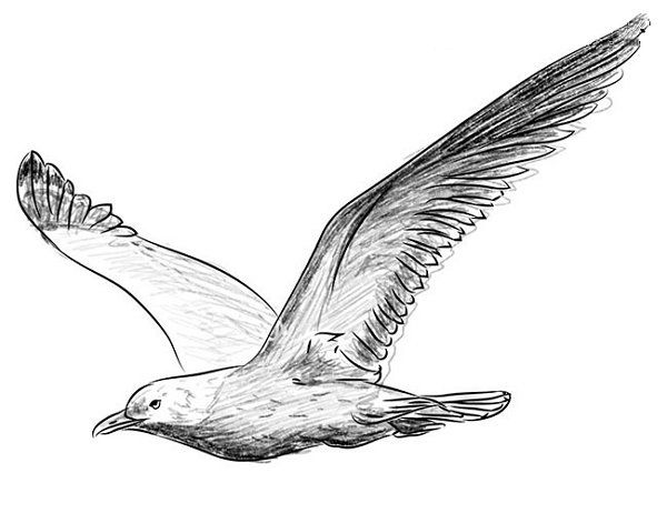 how to draw a seagull seagull drawing cards pinterest bird drawings how seagull draw a to