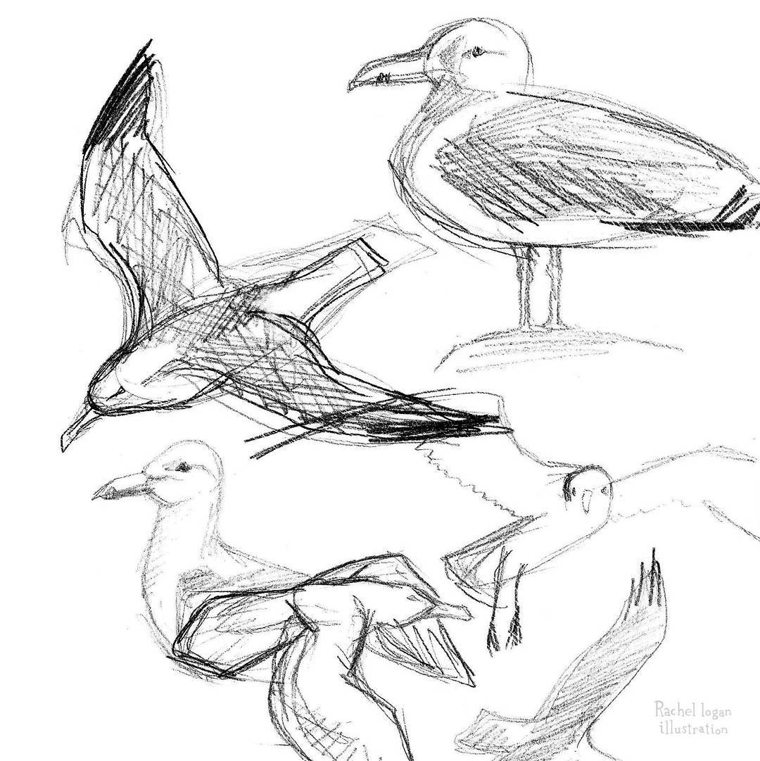 how to draw a seagull seagull drawing clipart best a how to seagull draw