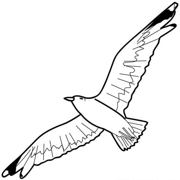 how to draw a seagull seagull drawing pencil sketch colorful realistic art a to how seagull draw