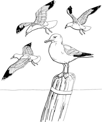 how to draw a seagull seagull sketches by fawnflight on deviantart a seagull to how draw