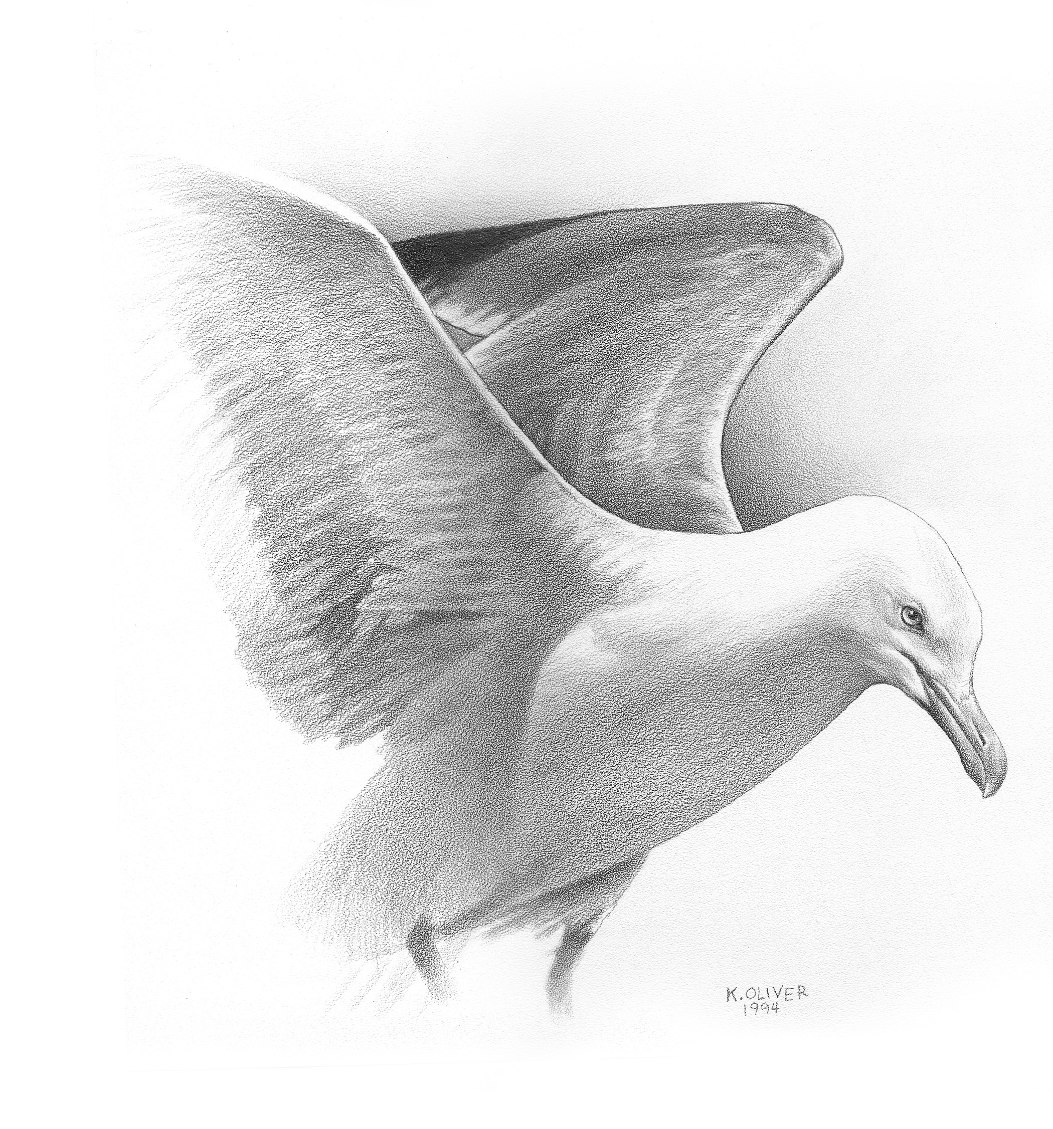how to draw a seagull seagulls drawing at getdrawingscom free for personal to draw how a seagull