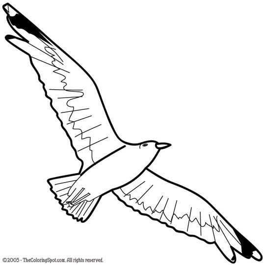 how to draw a seagull wildlife art by ken oliver at coroflotcom draw to seagull how a