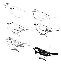 how to draw a sparrow google image result for httpspaintingvalleycom draw sparrow how to a
