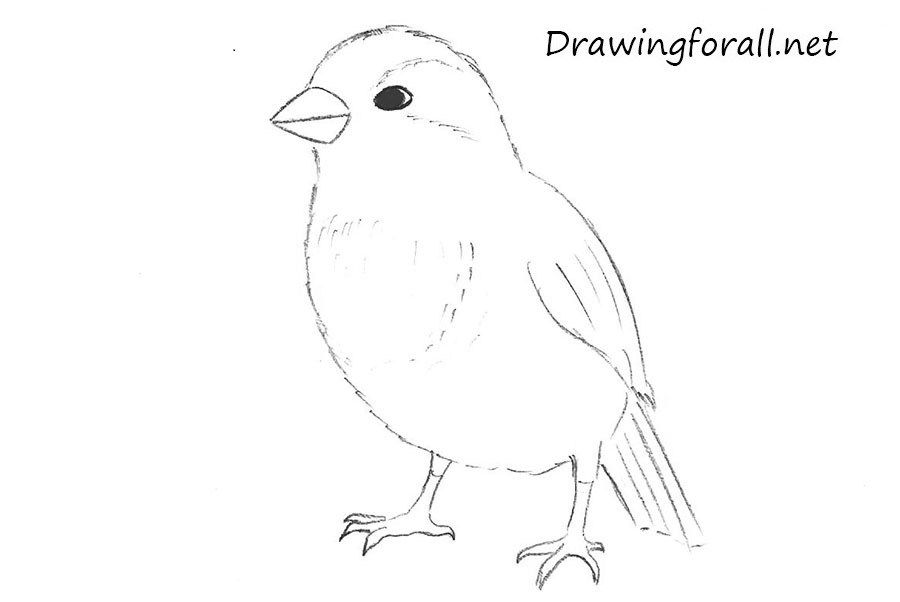 how to draw a sparrow how to draw a house sparrow step by step drawing to how draw sparrow a