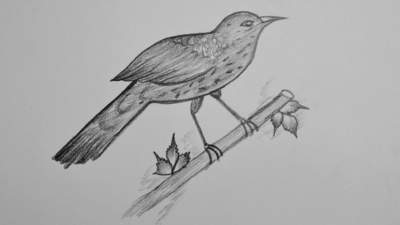 how to draw a sparrow how to draw a sparrow pencil sketching bird drawing draw sparrow how to a